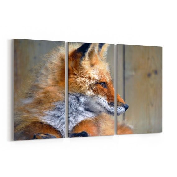 Red Fox Canvas Print Red Fox Wall Art Canvas Multiple Sizes Wrapped Canvas on Wooden Frame