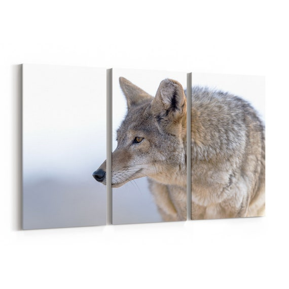 Coyote Canvas Print Coyote Wall Art Canvas Multiple Sizes Wrapped Canvas on Wooden Frame