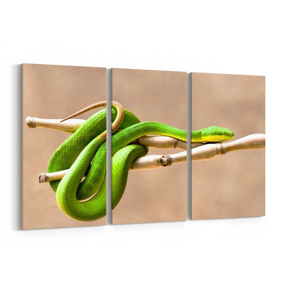 Viper Canvas Print Viper Wall Art Canvas Multiple Sizes Wrapped Canvas on Wooden Frame