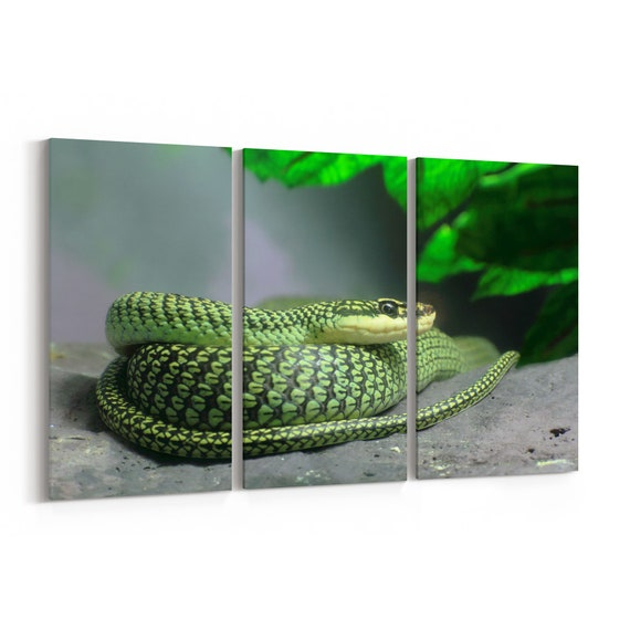 Tree Snake Canvas Print Tree Snake Wall Art Canvas Multiple Sizes Wrapped Canvas on Wooden Frame