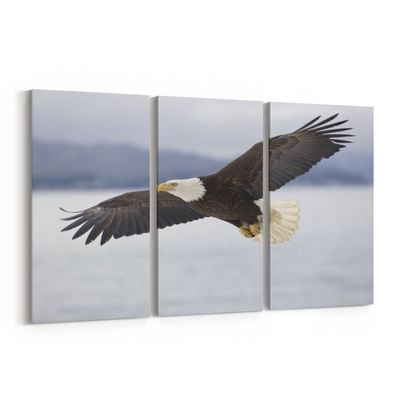 Flying Eagle Canvas Print Flying Eagle Wall Art Canvas Multiple Sizes Wrapped Canvas on Wooden Frame
