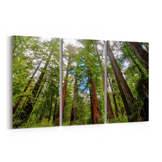 Redwoods State Park Canvas Print Redwoods State Park Wall Art Canvas Multiple Sizes Wrapped Canvas on Wooden Frame