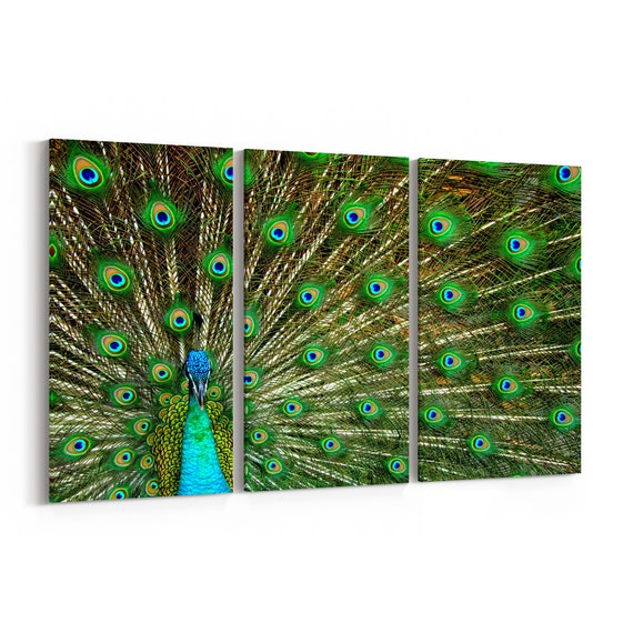Peacock Canvas Print Peacock Wall Art Canvas Multiple Sizes Wrapped Canvas on Wooden Frame