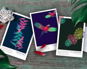 Tropical postcard, way Herbarium. Tropical postcard as herbarium + envelope
