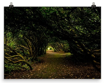 Fairytale, Woodland photo, Tree photo, Forestry, Landscape photography,  Wales. Welsh photography, Wall art
