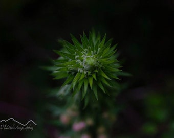 Wales, Welsh Photography, Trees, wall art, Welsh Photographer, Flower, Tree photo, Woodland, Nature, Photography