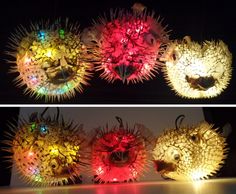 Puffer Fish Light Taxidermy Blowfish OOAK Taxidermy Horror