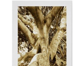 Big tree rustic decor, sepia tree wallart print, California Los Feliz art tree photography, fine art rustic tree nature landscape print gift