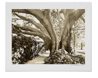 Tree rustic decor, sepia tree art print, best mom gift, best art rustic tree nature landscape print, California Los Feliz art photography
