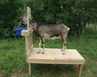 """Goatstand.com, Large 48""""x22""""  Goat Stand- Goat Milking Stanchion"""