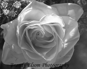 Flower Photography Rose Photography Wall Art Home Decor Etsy