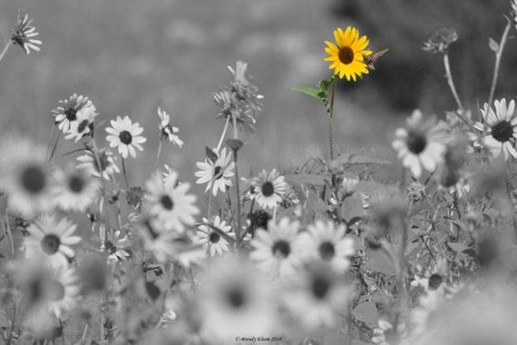 Flores Fotografía Fotografía Girasol Negro Y Blanco Fotografía Etsy