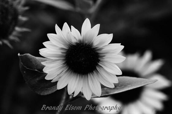 Blanco Y Negro Fotografía Girasol Blanco Y Negro Imprime Flor Etsy