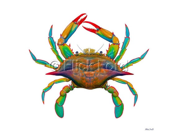 Masterworks Canvas Pop Art Maryland Blue Crab By Flick Ford Natural History Art Crab Painting Bright Colors Sea Creature Crustacean