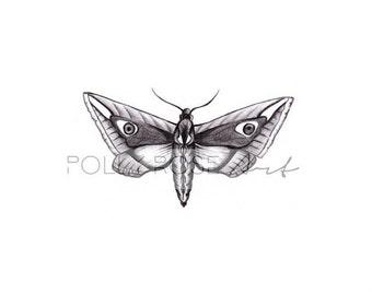 Moth Illustrative Print