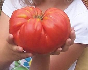Bulgarian tomatoes,Tomato seeds, Big Beef tomato seeds, Heirloom seeds