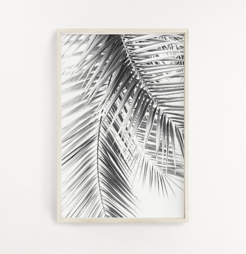 Palm Leaves Palm Tree Black And White Photography Nature image 0
