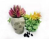 Succulent Skull Planter Concrete Planter, Succulent Planter, Small Planter, Small Pot, Succulent Pot, Concrete Pot