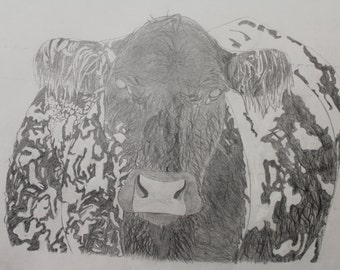 Snow Cow - Livestock Drawing