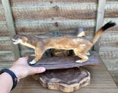 Lovely Preserved Vintage Stoat on Wood Taxidermy Mount Mammal Oddity Curio Home Decor Natural