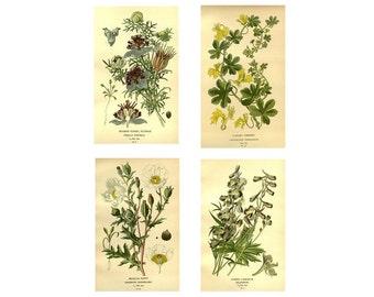 Set of 4 Vintage Botanical Floral Graphics Flower Printable Digital Graphics Antique Print Download Commercial High Resolution Digital Files