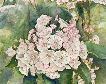 Mountain Laurel watercolor print