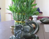 Jumbo Size Elephant Ceramic Vase with 3 Tier 4 quot 6 quot 8 quot Quality Lucky Bamboo Plant (FREE SHIPPING)