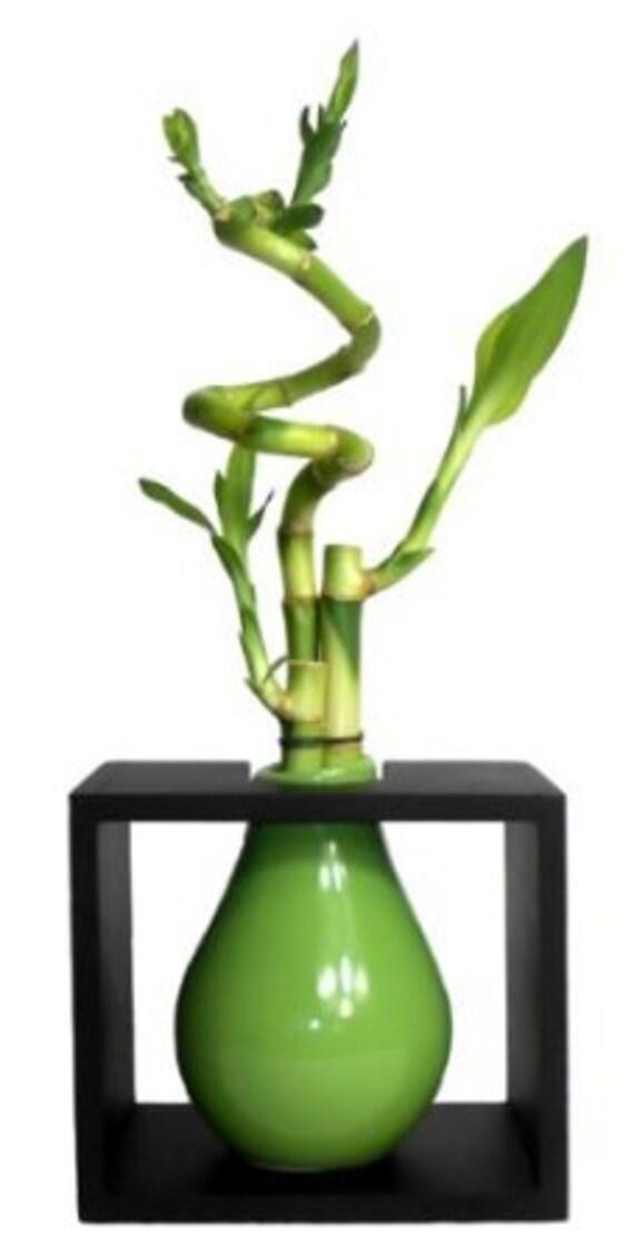 3 Tiges En Spirale Lucky Bambou Dans Un Vase En Goutte Etsy