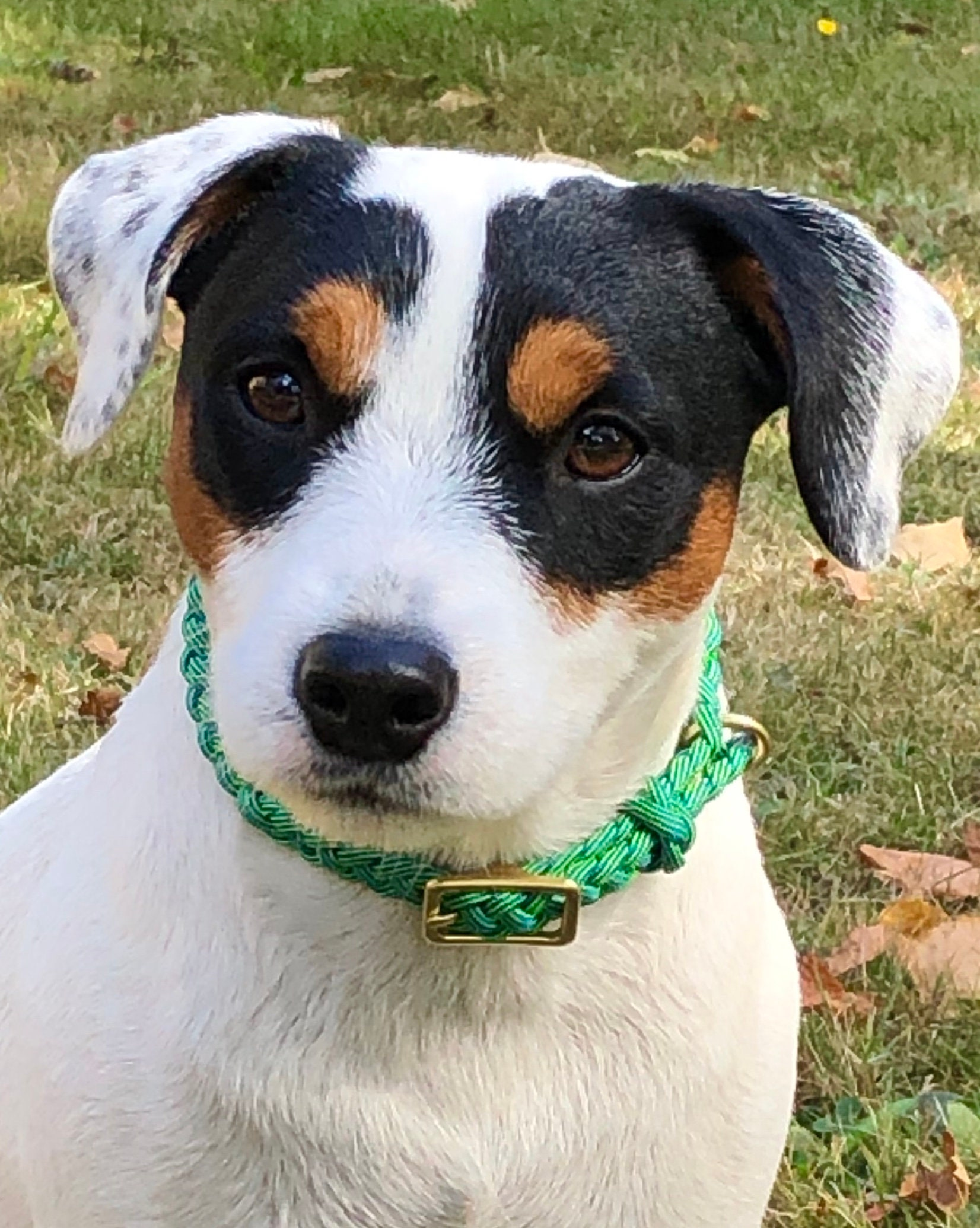 Paracord Collar Seagrasses From Small Dogs And Puppies