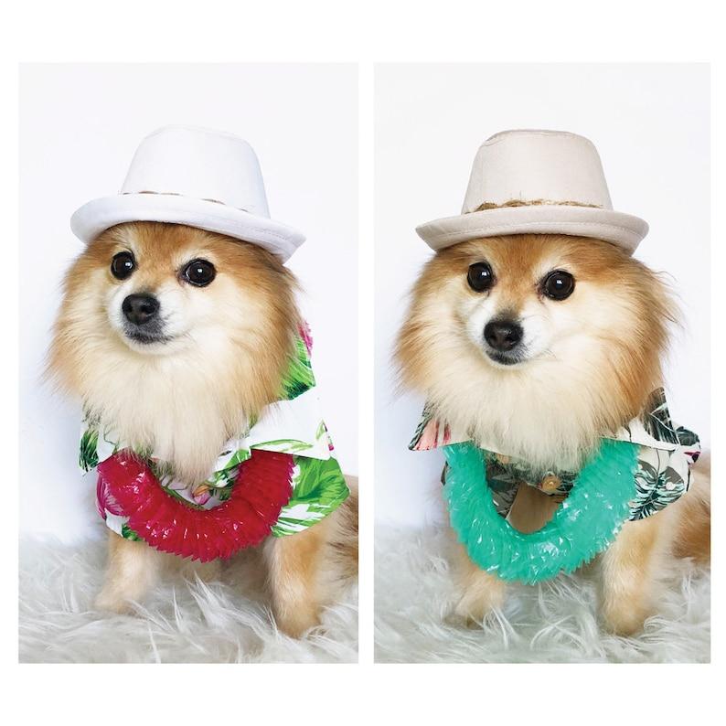 e65be48783c Hawaiian Fedora for DOGS CATS dog hats dog caps summer