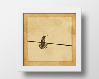 Hummingbird Of Brazil - Wall Art // Print, Sepia B/W Photo // Vintage // Rustic // Wildlife & Nature