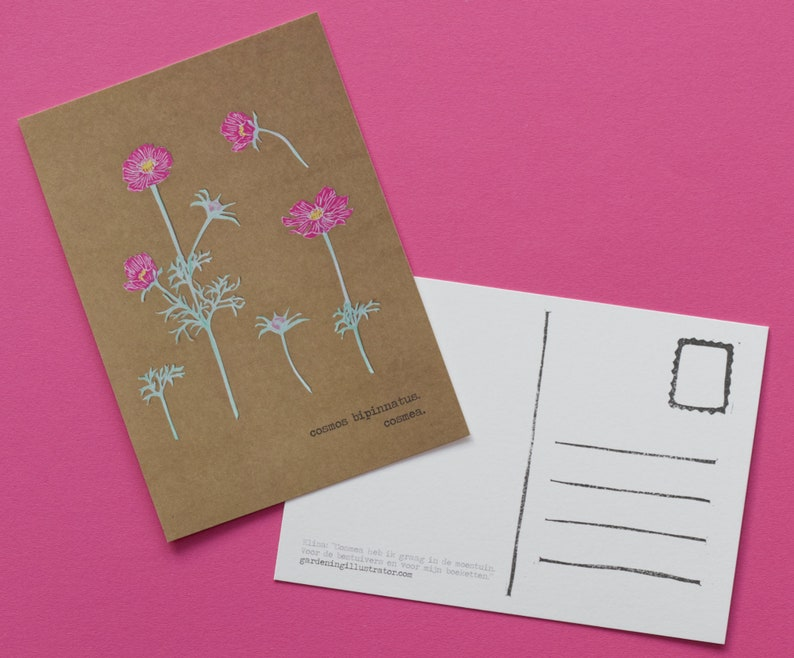 Cosmea : art map A6 with a botanical illustration. school image 0