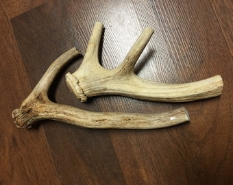 Two Antler Chews (with medium base)