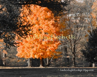 Fall Trees Photograph