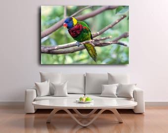 Digital Download Nature Photography Bird Print Animal Photography Parrot Wildlife Fine Art Instant Download Print Canvas Wall Art Print
