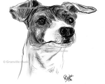 Jack Russell Dog Limited Edition Print