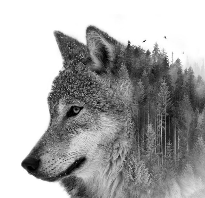 graphic regarding Printable Wolf Pictures referred to as Printable Wolf Wilderness Double Publicity Artwork Print -Electronic Obtain - Artwork Print - 8\