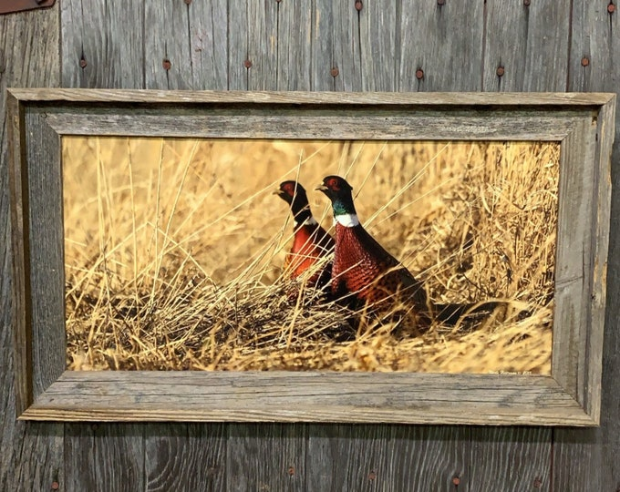 Pheasant Photo Fall Roosters Ring-necked Pheasant hunting South Dakota Photography Father's Day Gift for Dad Men Man cave cabin lodge print