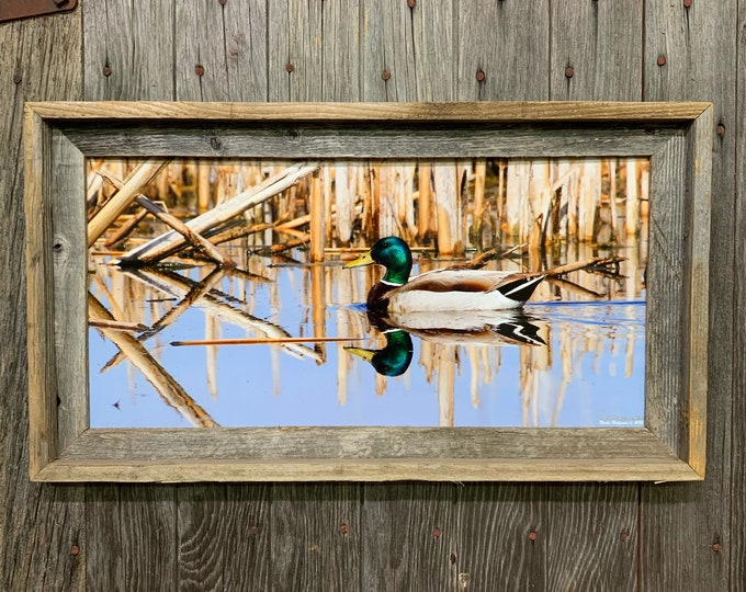 Mallard Photo Duck Photography Waterfowl hunting South Dakota Photography Father's Day Gift for Dad Men Hunter Man cave cabin lodge print