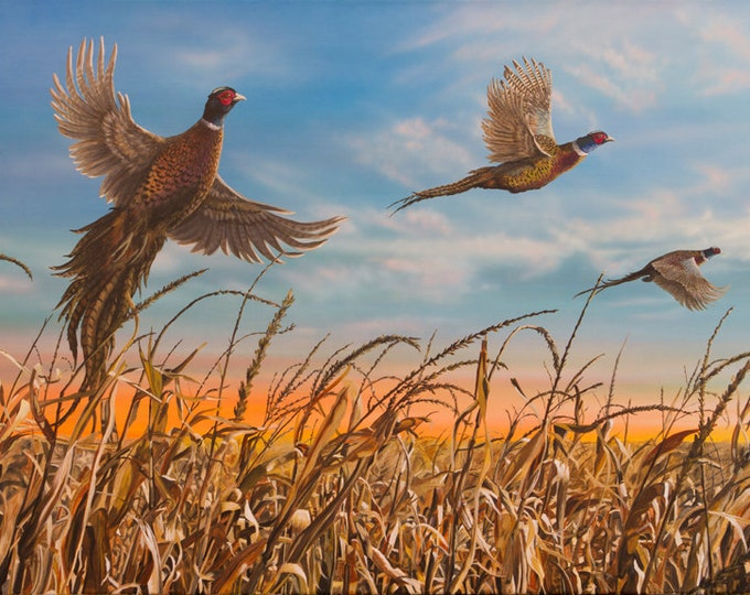Father's Day Gift Pheasant Print Pheasant Art Pheasant Painting Pheasant Hunting Dakota Harvest Canvas Print by Nicole Heitzman