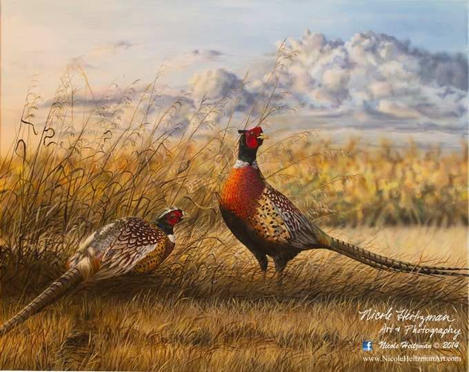 Heartland Ringnecks Pheasant Painting Gift for Dad Pheasant Art Pheasant Print Wildlife Art Print Canvas Giclee Print by Nicole Heitzman