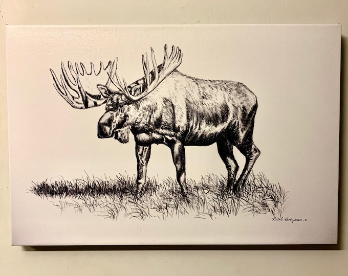 Moose Art drawing Black and White Canvas giclee Print Wildlife art Father's Day gift for Dad men Lodge Cabin Art Man cave by Nicole Heitzman