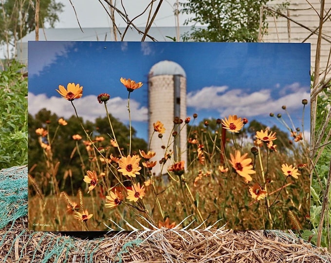 Wild Sunflower Photography Flower Silo Photo Rural Country Scenery Country Decor Gift for Mom her Farm scenery photo by Nicole Heitzman