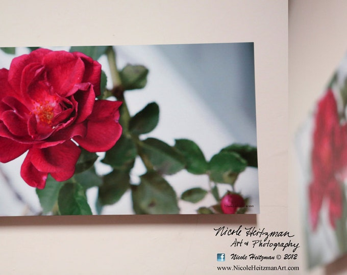 Rose Photo Flower photography Spring Decor Metal Print Mother's Day Gift for Mom Garden Roses Summer flowers Spring Decor by Nicole Heitzman