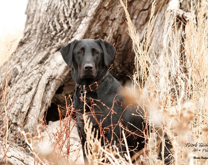 Black Lab Photo Gift for Men Black Lab Photography Fall Art Block Photography Fall Scene Duck hunting Dog Photography by Nicole Heitzman