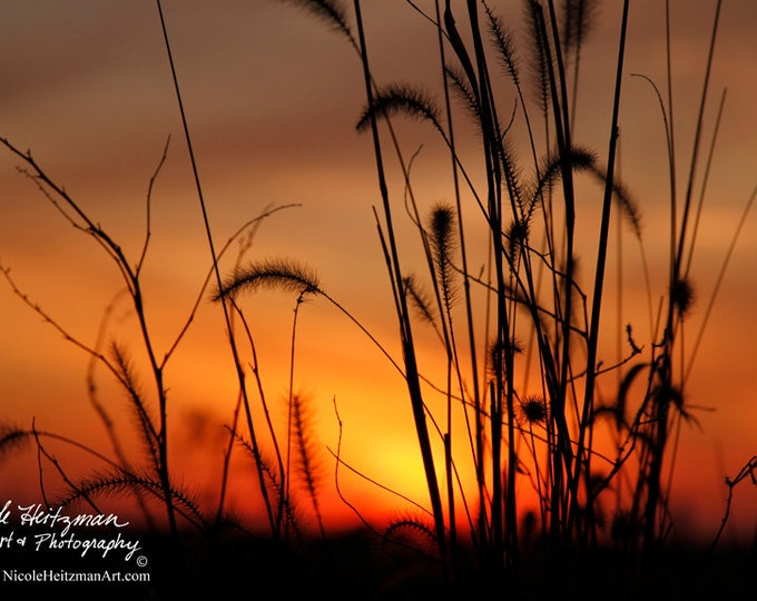 Fox Tail Prairie Grass Sunset photography Photo Print Gift for mom birthday gift for women Country Decor South Dakota by Nicole Heitzman