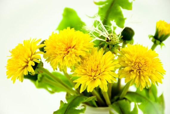 Dandelion flower bouquet white dandelion flower arrangements etsy image 0 mightylinksfo