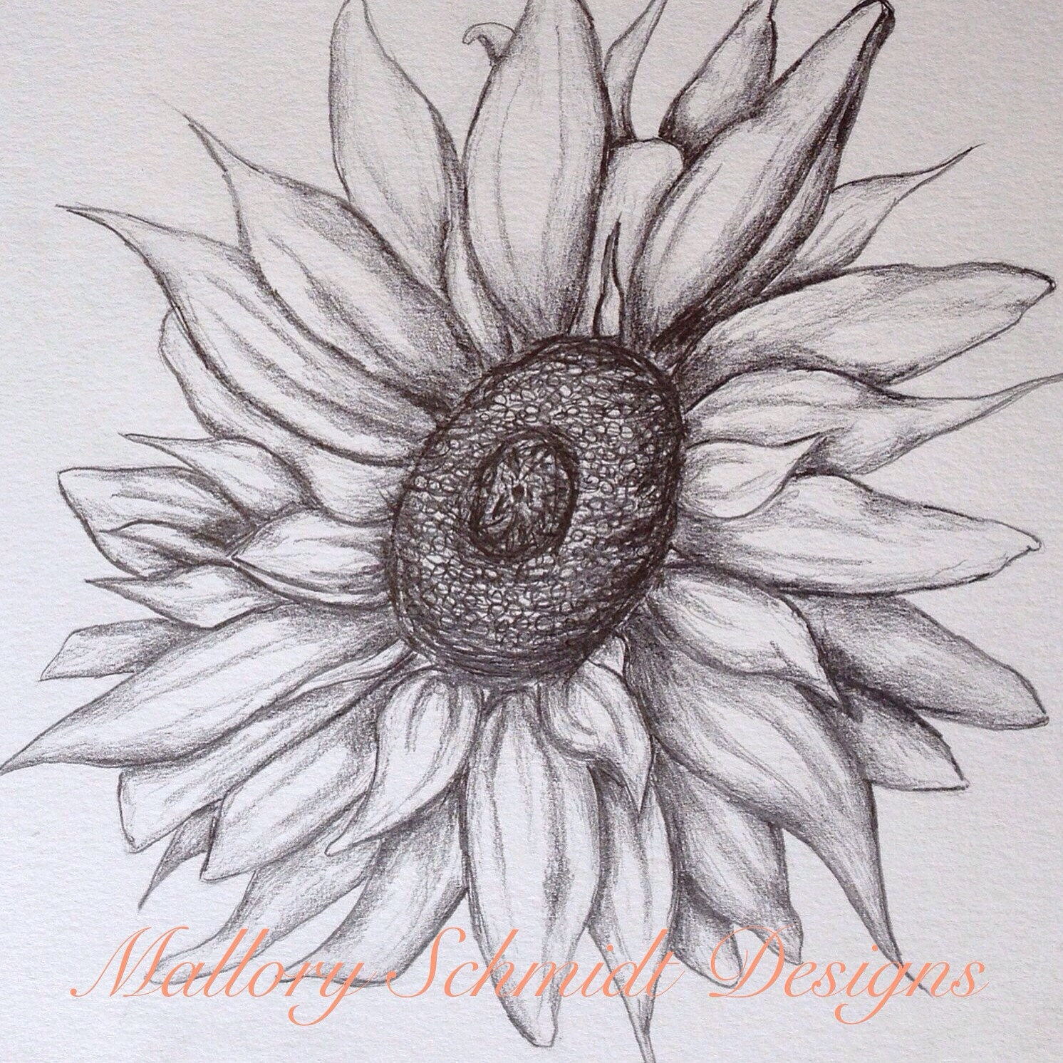 Sunflower home decor original pencil drawing wall art sunflower drawing gray wall art original art fine art black and white pencil drawings