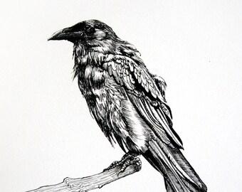 Original Raven Drawing - Raven or Crow Illustration - Bird Art - Ink Drawing