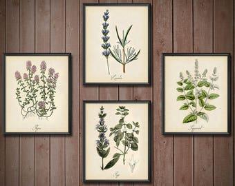 Kitchen Decor Set Herbs - SET OF 4 - Kitchen Herb Wall Art Set - Kitchen Herb Print Set - Kitchen Art Print Set - 2405